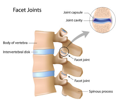 Facet Joint Anatomy - Health Plus Chiropractic